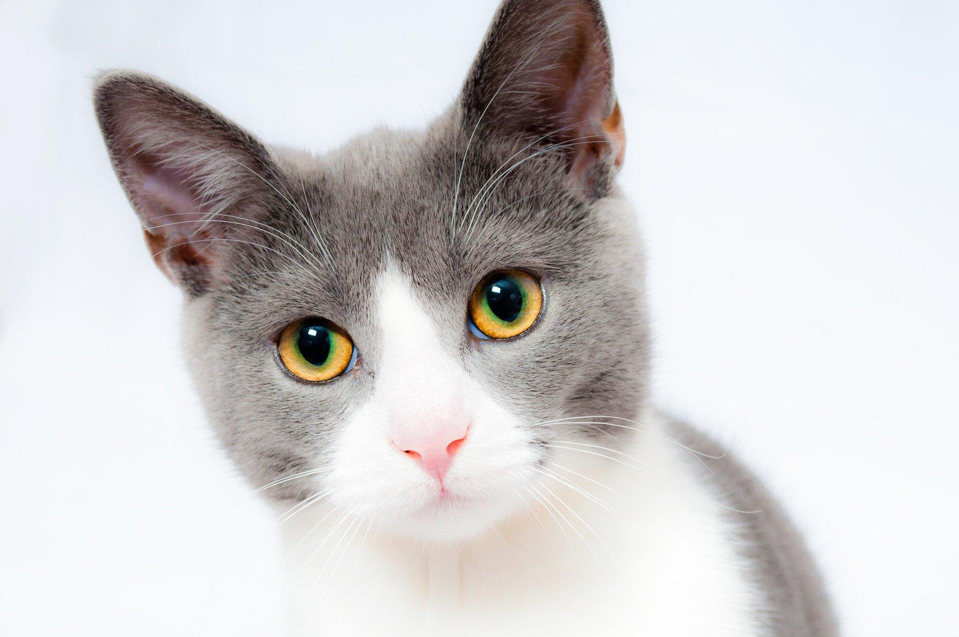 het-nieuwe-kitten