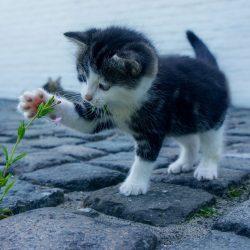 kitten met bloem