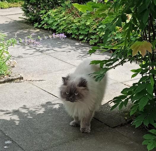 Anna in de tuin