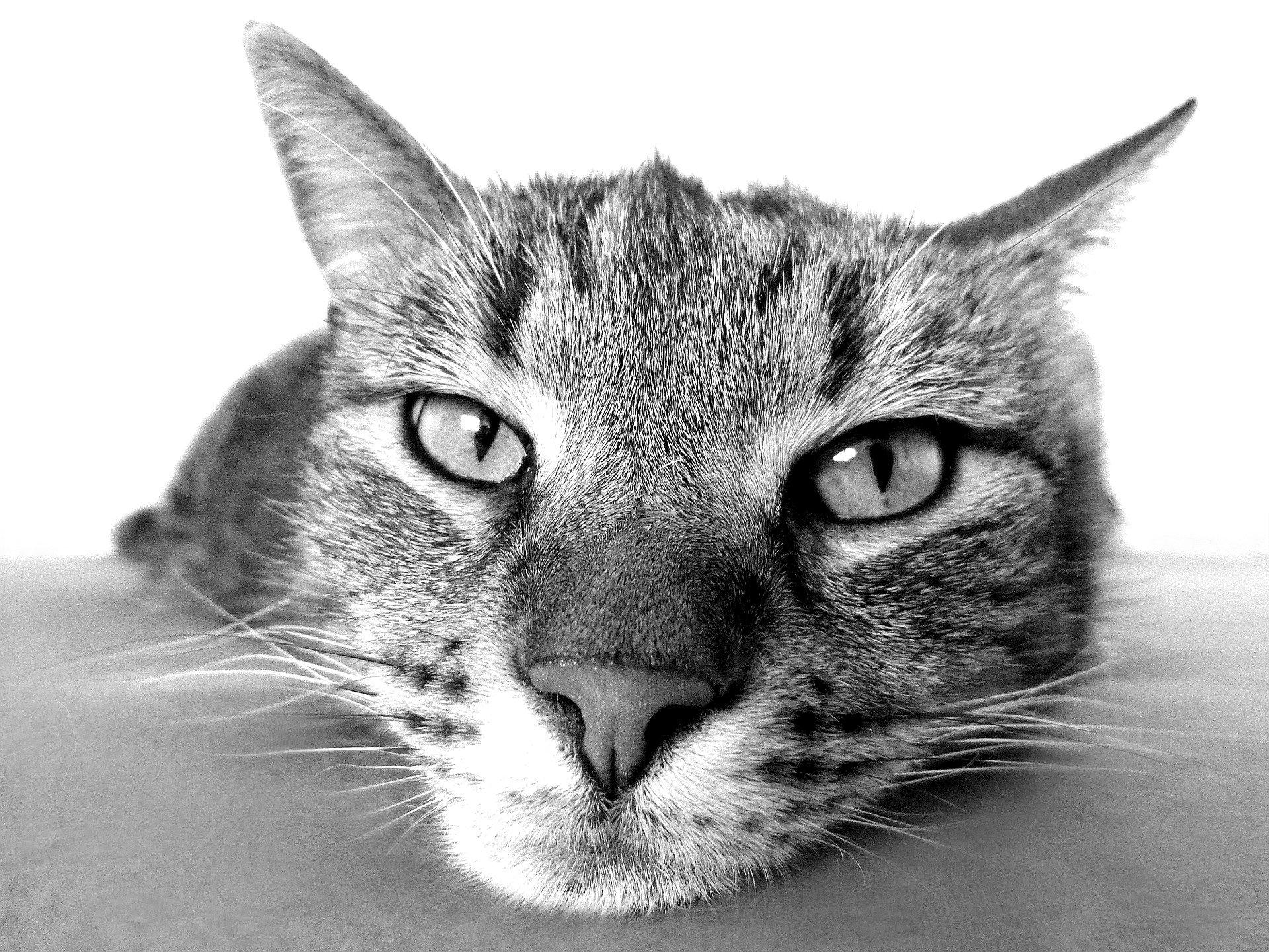 kat bij dementie