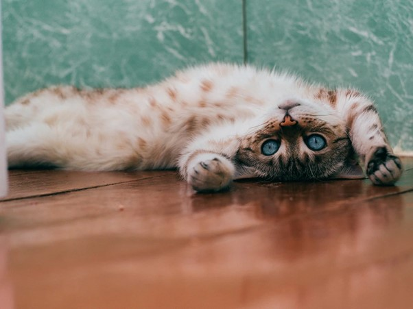kattenfilmpjes populair