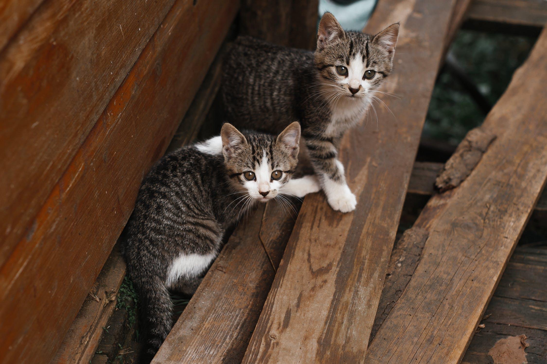 kitten-dat-precies-past