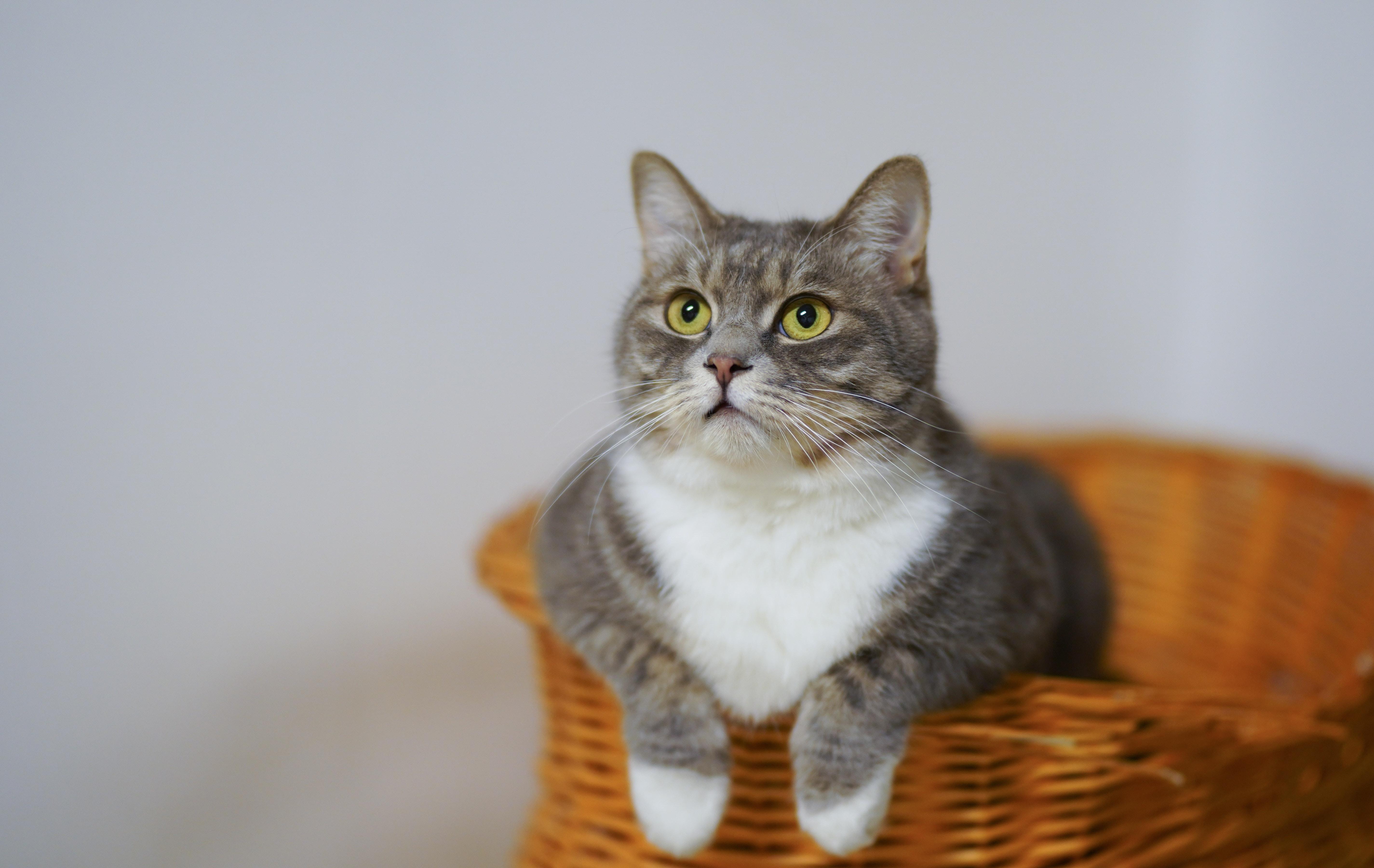 pexels-cats-coming-enting