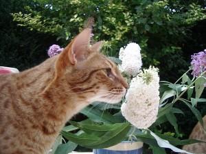Draga Pisica Loes heynemans